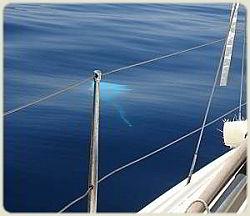 Sailing Flotilla - Manta Ray